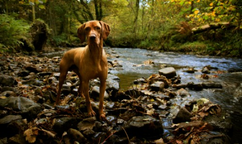 Dog at a creek