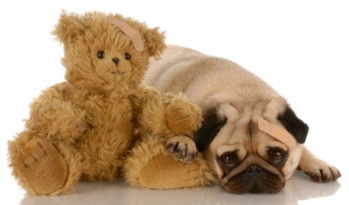 Dog with a teddy bear
