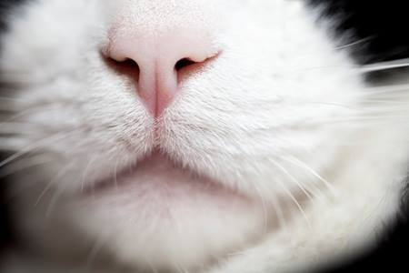 cat nose and whiskers