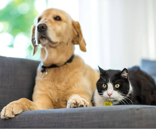 Dog and cat sitting on sofa