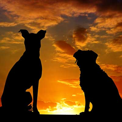 two dogs silhouetted in a sunset